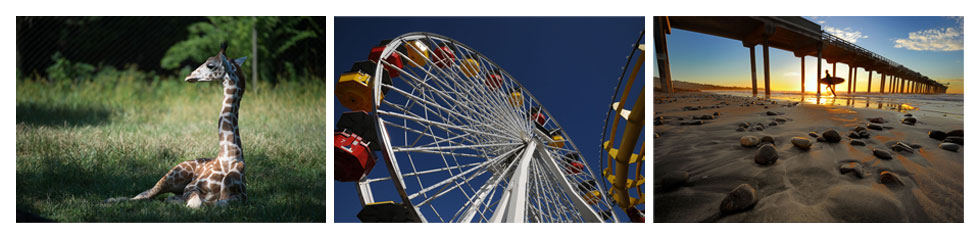 Three images of a giraffe, a ferris wheel, and a pier